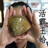 ㊣盅龐水產◇活體霸王蛤◇3~4顆/kg Q彈多汁 團購 批發 餐廳