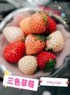 【果之蔬-全省免運】日本奈良縣三色草莓x1箱(2盒/箱/20~34顆入/500g±10%)