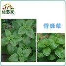 【綠藝家】大包裝K04.香蜂草種子4克 ...
