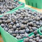 【莓果工坊】新鮮冷凍栽培藍莓 I.Q.F.Cultivated Blueberry