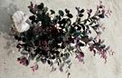 [紅彩木] 5-6吋 室外植物活體盆栽 觀賞花卉盆栽