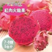 沁甜果園SSN.屏東紅肉火龍果(7-8顆裝/5台斤)﹍愛食網