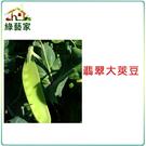 【綠藝家】大包裝E04.翡翠大莢豆(改良...