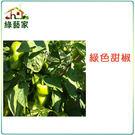 【綠藝家】G01.綠色甜椒(銘星.荷蘭進...