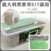 *WANG*《鼠兔家族》義大利黑麥草DIY栽培盒
