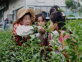 [宜蘭]星源茶園-精緻單人農業體驗一日遊