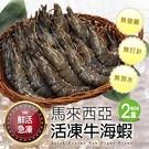 【屏聚美食】馬來西亞活凍特大牛海蝦2盒(1kg/盒/20-25尾)