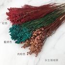 永生珊瑚果-乾燥花圈 乾燥花束 不凋花 拍照道具 手作素材 室內擺飾 裝飾插花鄉村風-98元/束