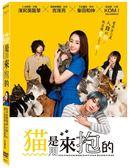 【停看聽音響唱片】【DVD】猫是用來抱的