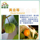 【綠藝家】I10.燈籠果(黃金莓)種子3...
