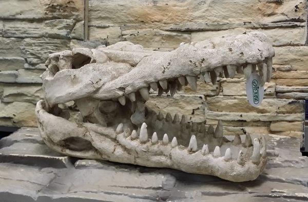【西高地水族坊】ISTA代理 造景擺飾 鱷魚頭40cm*19cm*19cm