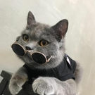 小貓咪寵物拍照道具墨鏡
