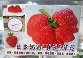 水果果苗 ** 日本奶油真飽草莓 ** 2.5吋盆/高約10cm / 淡淡的牛奶香味【花花世界玫瑰園】R