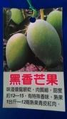 水果苗 ** 黑香芒果 ** 4.5吋盆/ 高50-60公分/龍眼香味【花花世界玫瑰園】R