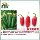 【綠藝家】大包裝G95.姆指香辣椒種子150顆