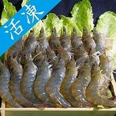 南美活凍大白蝦40/50 1.2kg±50g