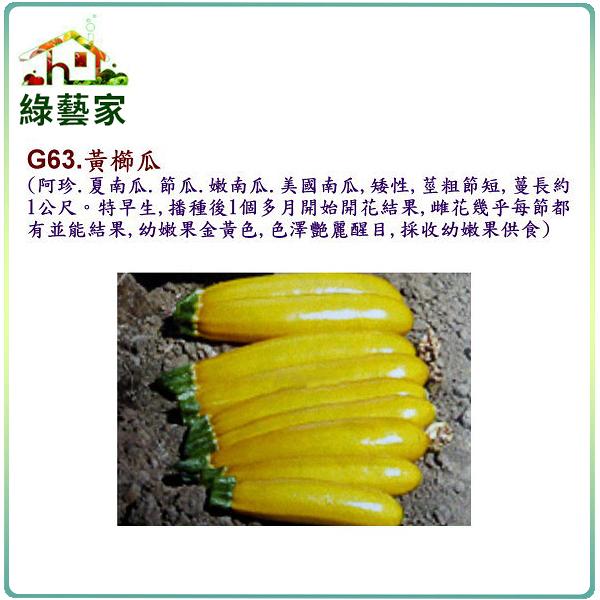 【綠藝家】G63.黃櫛瓜(阿滿.夏南瓜.節瓜.嫩南瓜.美國南瓜)種子2顆