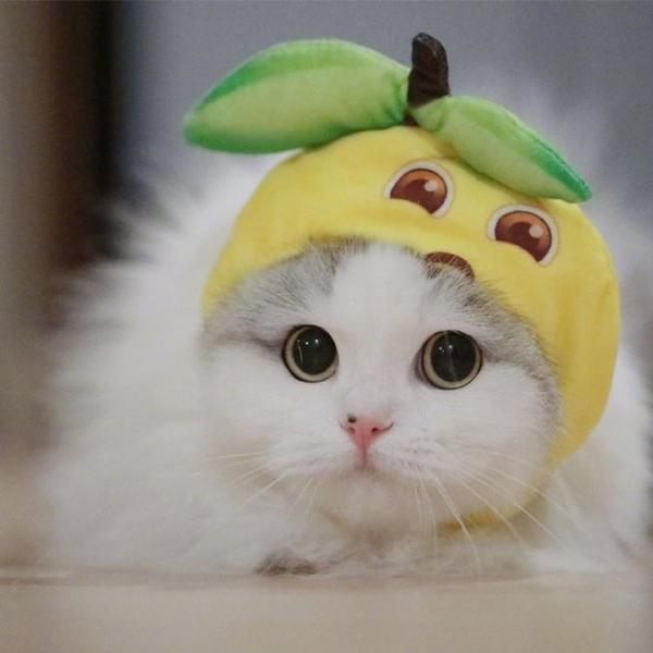寵物帽子用品檸檬精錶情包裝扮