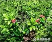 綠植牆仿真植物牆裝飾草坪門頭室內背景形象壁掛花牆面塑料假草皮  快意購物網