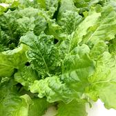 預購 【安心蔬食】水耕蔬菜-綠拔葉萵苣(150g)