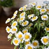 雛菊 假花絹花裝飾花束客廳插花 家居飾品擺放花藝 卡卡西