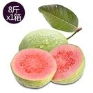 【果之家】特選高雄燕巢脆甜爽口紅心芭樂8台斤(約12-16顆)