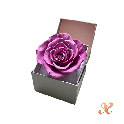 Boxtory 繁星不凋花 - 紫羅蘭