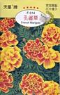 [孔雀草種子] 各式觀賞花卉種子 香草種...