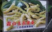 花花世界_水果苗--霜白玉長果桑--可當鮮果生食用/5-6吋盆/高20-30cm/Ts