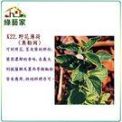 【綠藝家】K22.野花薄荷種子(奧勒岡)300顆