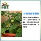 【綠藝家】G88.湯姆矮種蕃茄種子5顆...