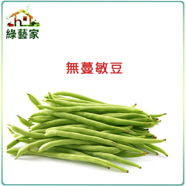 【綠藝家】E02.無蔓敏豆(無蔓矮腳品種)種子40顆