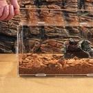 爬寵物飼養箱透明壓克力材質透明箱