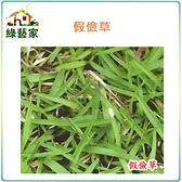 【綠藝家】超級假儉草種子17克(超級喬治亞.純度99%)