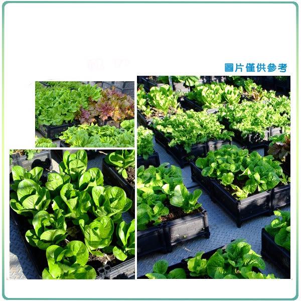 【綠藝家】DIY家庭栽培組//型號SF