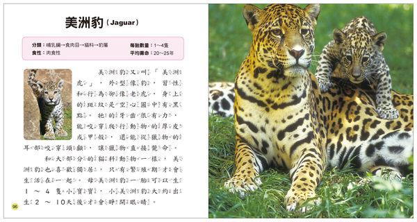 【人類文化】動物寶寶小百科 5~8歲幼兒 全方位圖鑑小百科