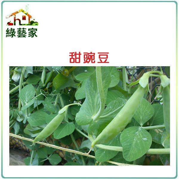 【綠藝家】E03.甜豌豆 (嫩豆)種子100顆