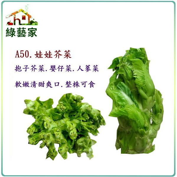 【綠藝家】大包裝A50.娃娃芥菜種子12克