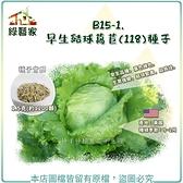 【綠藝家】B15-1.早生結球萵苣(118)種子1.5克(約1200顆)