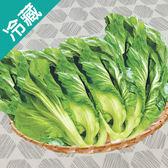 台灣長年菜1粒(500g±5%/粒)【愛買冷藏】