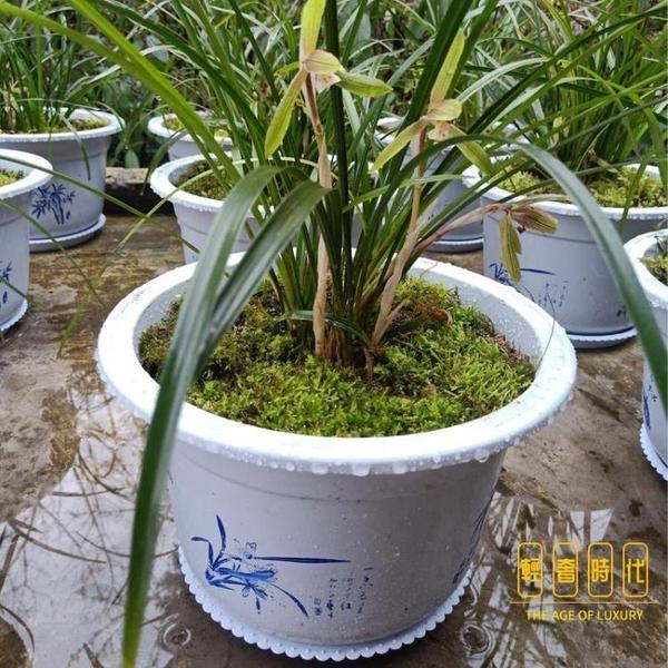 10個裝 透氣花盆塑料家用加厚綠籮蘭花盆環保樹脂陽臺花盤【輕奢時代】