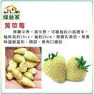 【綠藝家】I09.黃草莓種子8顆...