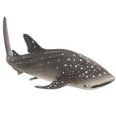 【Mojo Fun 動物星球頻道 獨家授權】 鯨鯊 387278