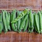 CARMO軟夾碗豆種子 園藝種子(單份) 【FR0078】