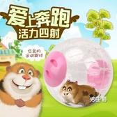 倉鼠跑球 玩具滾球運動球金絲熊跑輪套裝小用品跑步球外帶包過安檢 快速出貨