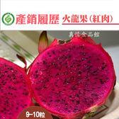 產銷履歷陳家火龍果-紅肉10台斤/箱 (大果)