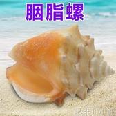 魚缸擺件 天然海螺貝殼胭脂螺 家居櫥窗擺件 魚缸水族造景裝飾 魚缸造景   LX新年禮物