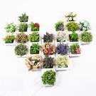 房間裝飾 拍照道具 多肉植物 仿真植物 壁貼
