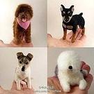 心動小羊^^仿真系列狗狗美麗諾羊毛羊毛氈材料包、可製作成手機吊飾(純羊毛製品)