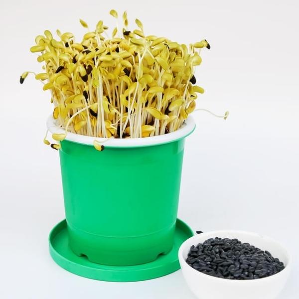 豆芽機 豆芽機家用黃豆綠豆黑豆芽菜種植桶麥飯石大容量發豆芽神器豆芽罐 快速發貨